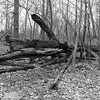 North Woods I _ bw