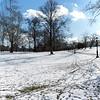 Central Park in December II