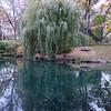 Big Willow