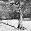 Central Park December VII