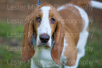 Central Park DOG SHOW - 2019