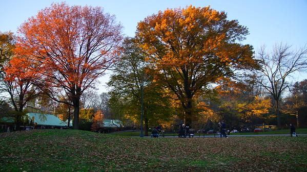 Central Park, NYC, November 24, 2017 - SONY