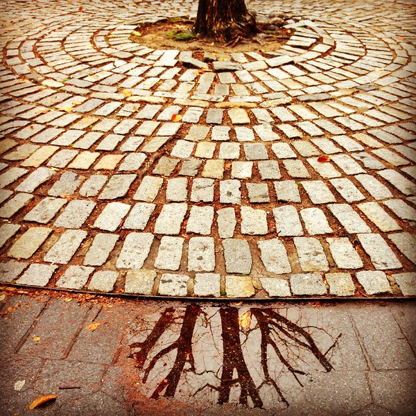 Tree Reflection - The Mall