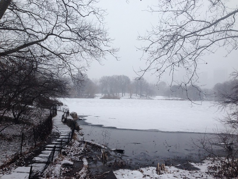 Winter Walk Past the Frozen Lake
