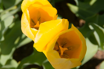 Conservatory Garden - Yellow/Orange Flowers