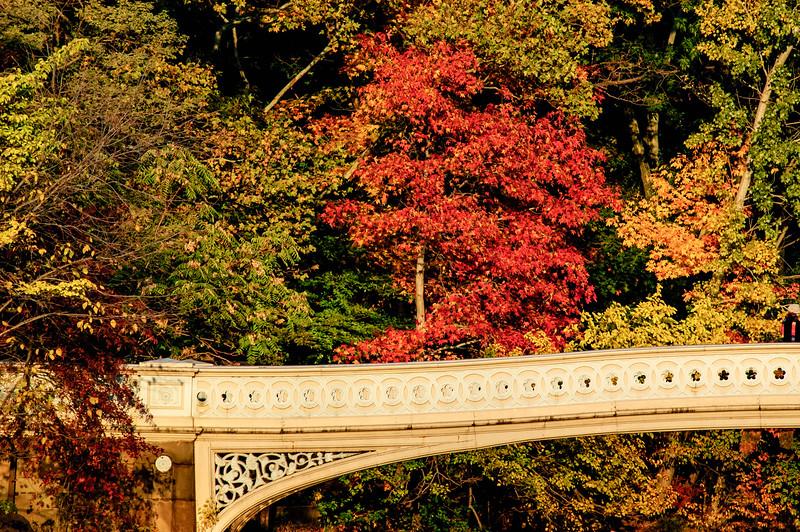 Bow Bridge. Central Park