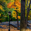 Fall Foliage. West Drive and 81st. Central Park