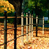 Fence and leaves at The Mall. Central Park