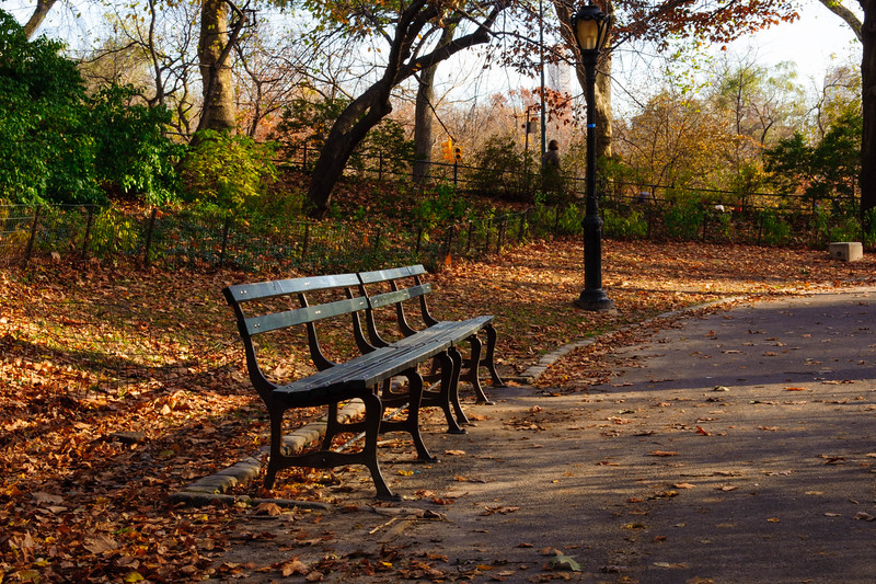 Bench along Naturalist's walk, Central Park