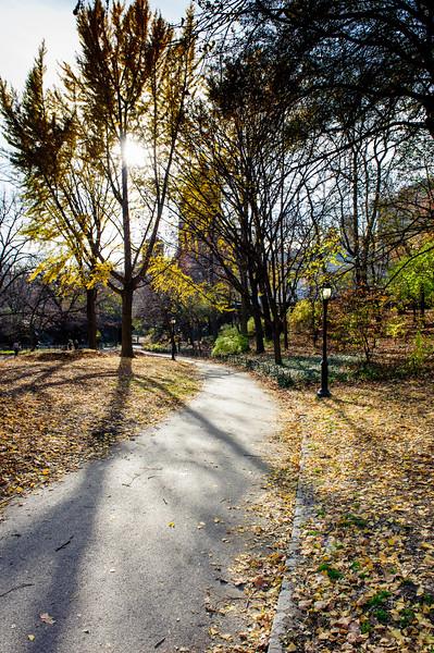 Naturalist's walk at sunset. Cenntral Park