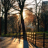Fence and Trees at sunset. Central Park