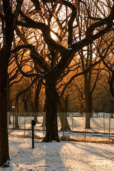 Trees and snow at sunset. Central Park