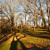 Bare trees at sunset. Central Park