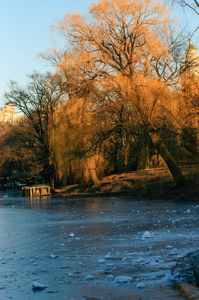 The frozen Lake. Central Park