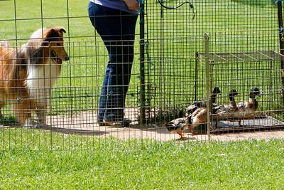 Ducks-0512
