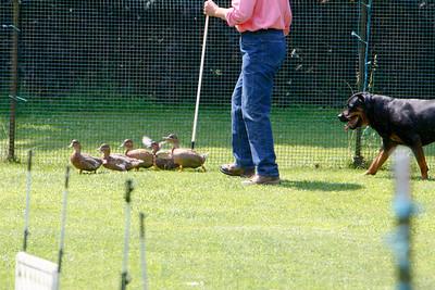Ducks-0499