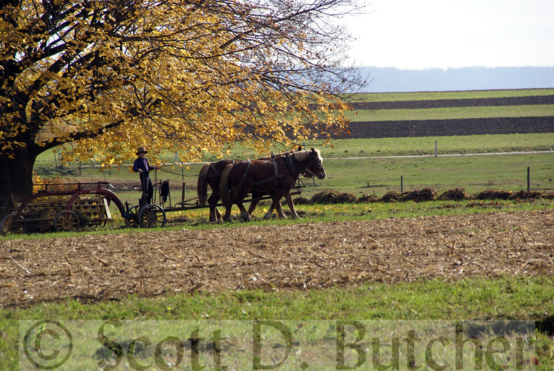 Amish Farmer, Lancaster County, PA