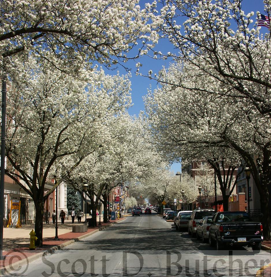 Spring on West Market Street