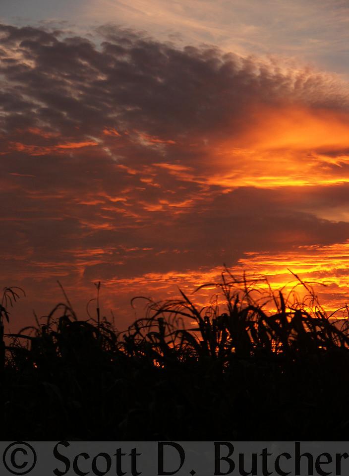 Autumn Sunset, East York.