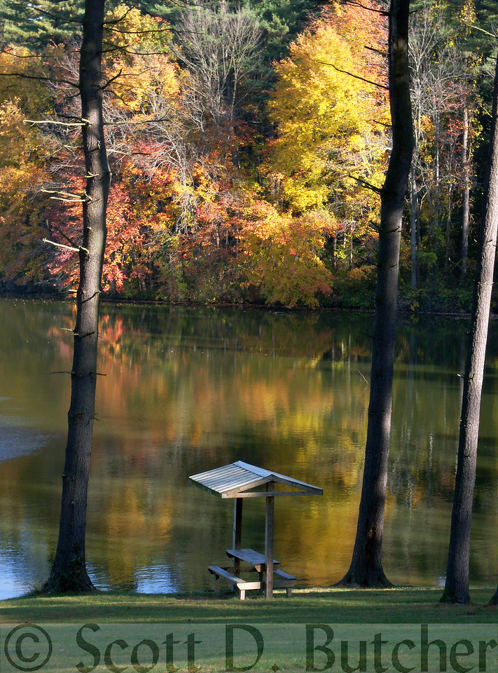 Autumn Morning at Lake Williams
