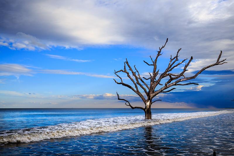 Boneyard Tree #1 - Near Botany Bay Beach, Edisto Island, SC
