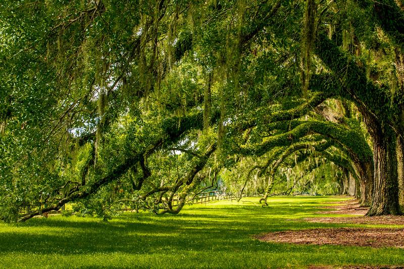 Avenue of Oaks #2 - Boone Hall Plantation, Mount Pleasant, SC