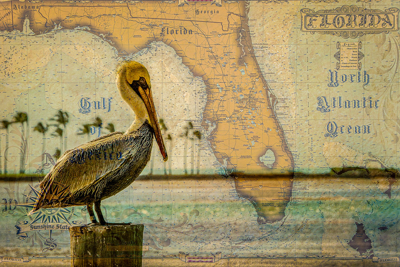 Historic Map and Pelican - Florida