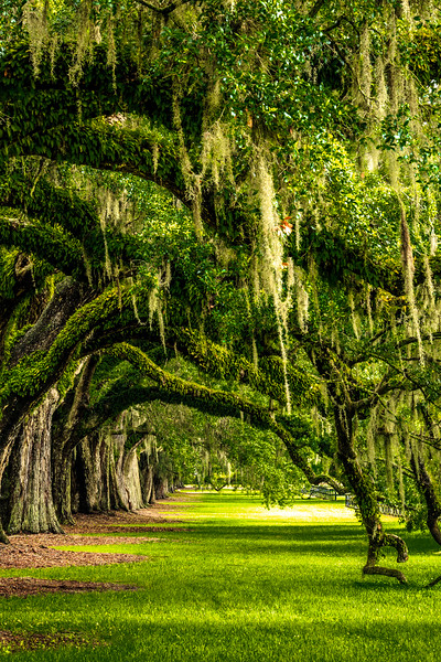 Avenue of Oaks #1 - Boone Hall Plantation, Mount Pleasant, SC