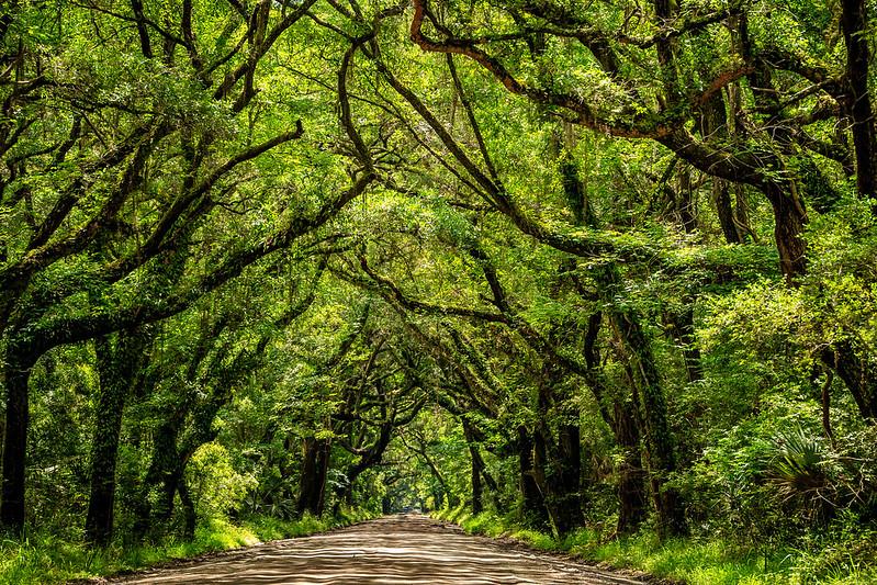 Tree Canopy #1 - Near Botany Bay Plantation Heritage Preserve and Management Area, Edisto Island, SC