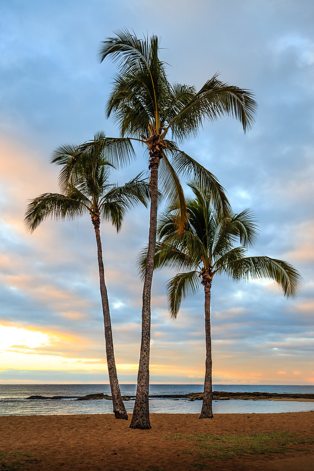 Palms at Salt Pond Beach - Kauai