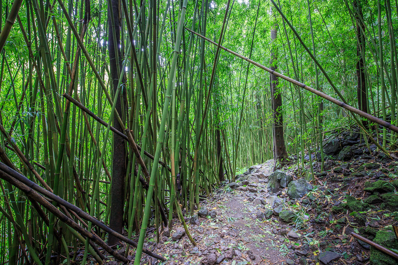 Bamboo Forest #2 on Pipiwai Trail - Maui