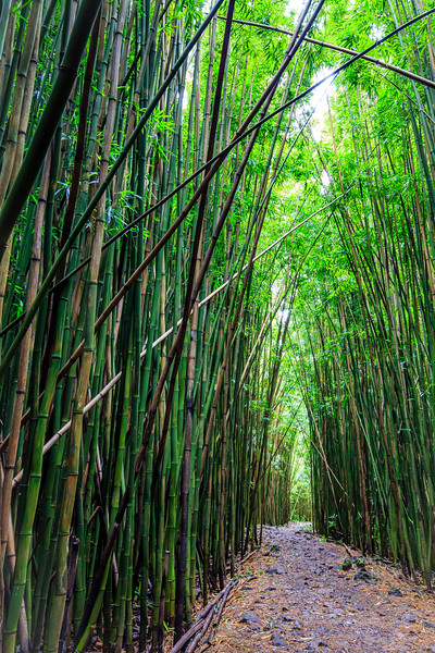 Bamboo Forest #1 on Pipiwai Trail - Maui