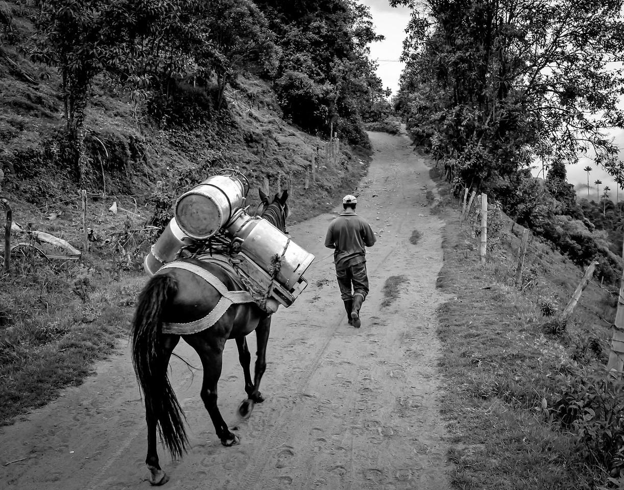 Cocora Valley - Salento, Colombia