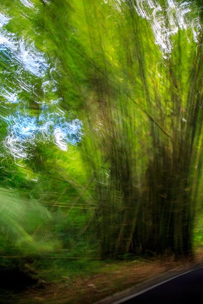 Jungle Road #2 - El Yunque National Forest, Puerto Rico