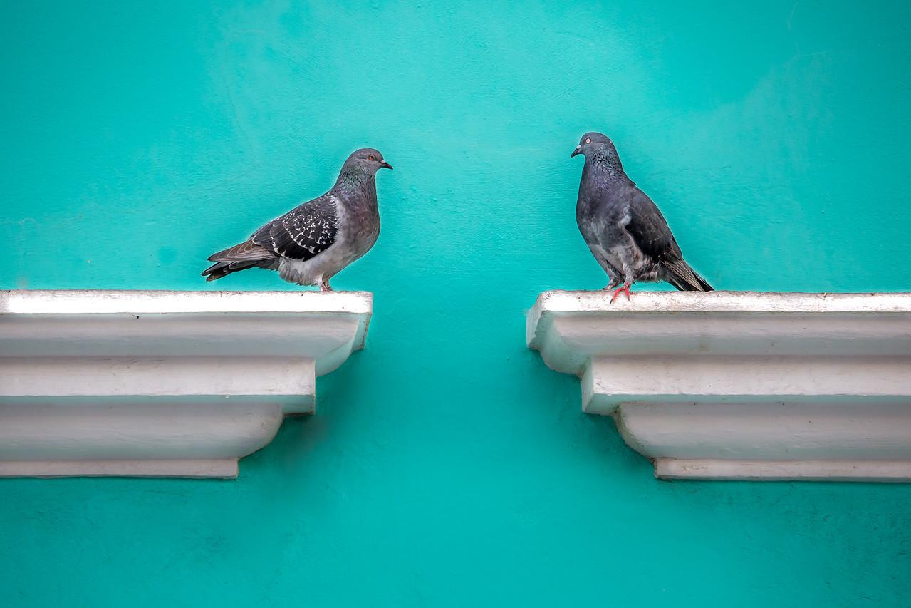 Pigeon Love - Old San Juan, Puerto Rico