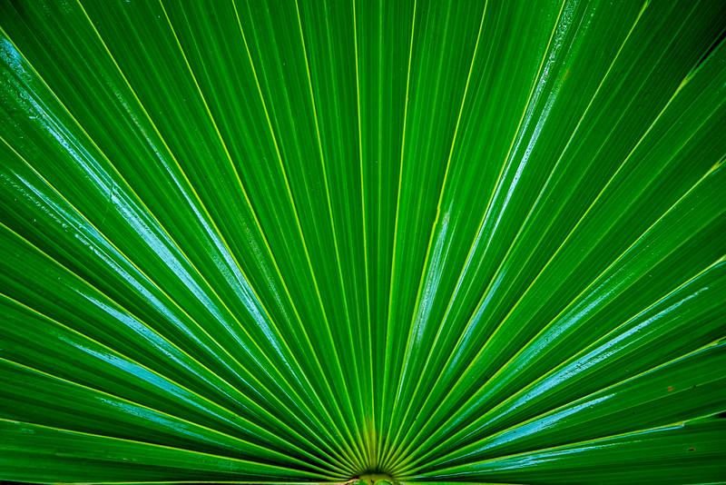 Palm - Isles Mujeres, Mexico