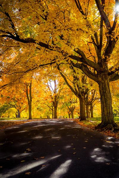 Fall Leaf Tunnel - Minneapolis, MN