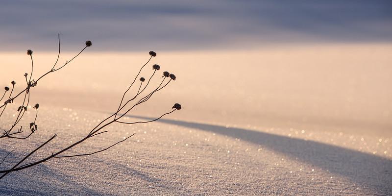 Snowy Twilight (Pano) – Maplewood, MN
