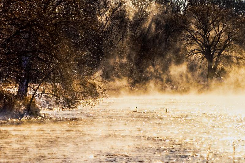 Trumpeters – Lake Phalen, St. Paul, MN