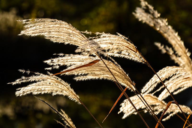 Grasses - St. Paul, MN