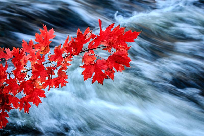 Red and Silver - Minnehaha Creek, Minneapolis, MN