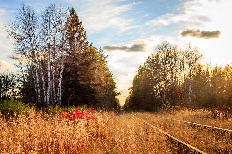 Fall Traintracks - Springbrook, WI