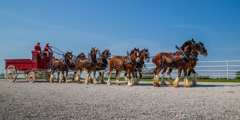 Clydesdales (Pano) - Warm Springs Ranch, MO