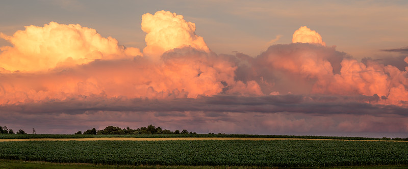 Amish Field (Pano) - Cashton, WI