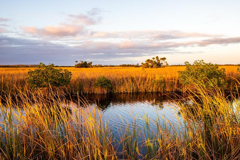 River of Grass - West Everglades