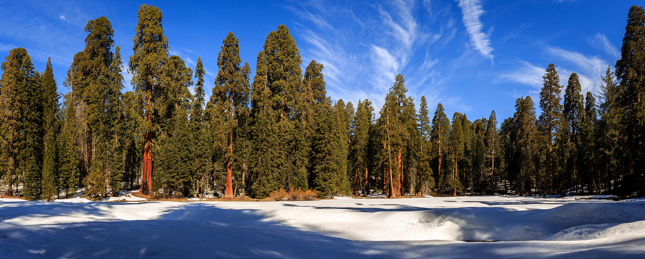Sequoia (Pano #1) - Sequoia, National Park, CA