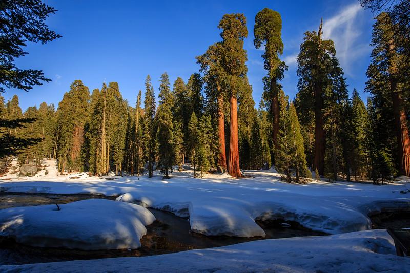 Sequoia #2 - Sequoia, National Park, CA