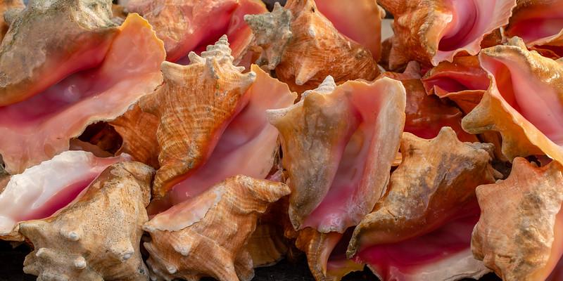 Conch Shells - Fishmarket, New Providence, Bahamas