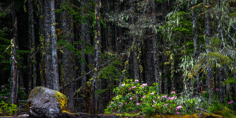 Ramona Falls #5 (Pano) – Mt. Hood National Forest, OR