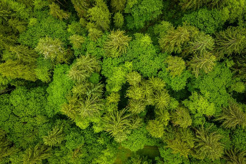 Hoh Rain Forest #2 – WA